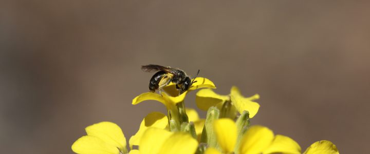Guide of pollinators and catalogue of functional groups