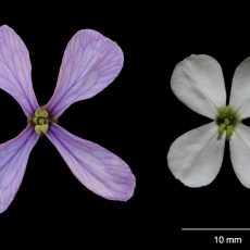 Within-individual phenotypic plasticity in flowers fosters pollination niche shift