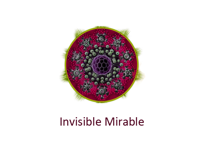 INVISIBLE MIRABLE